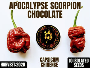 Apocalypse Scorpion Chocolate (Capsicum Chinense) Super Hot-10 Isolated Seeds