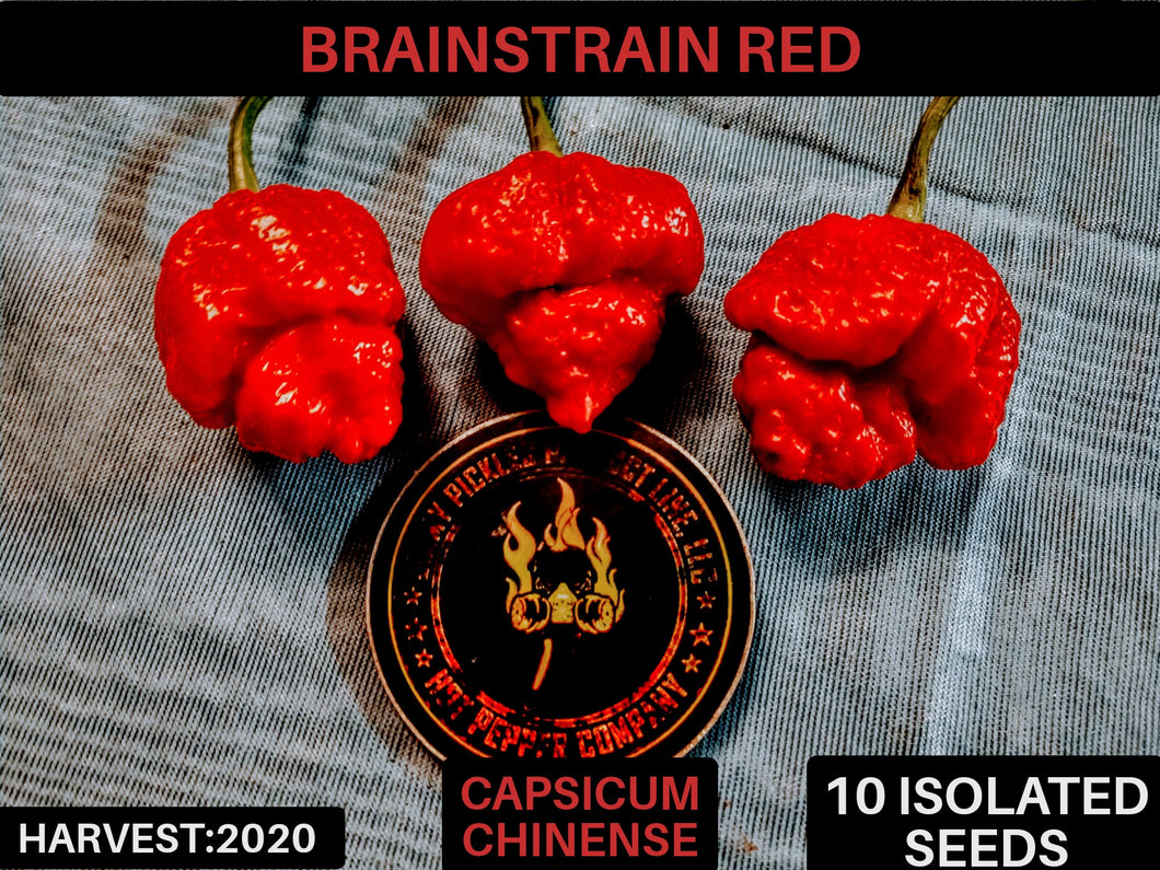 Brain Strain Red (Capsicum Chinense) Super Hot-10 Isolated Seeds