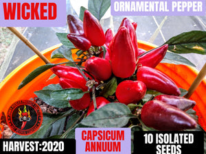 Wicked (Capsicum Annuum) Mid Hot- 10 Isolated Seeds