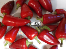 Load image into Gallery viewer, Wicked (Capsicum Annuum) Mid Hot- 10 Isolated Seeds