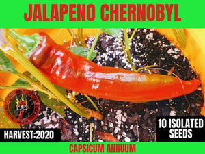 Jalapeno Chernobyl (Capsicum Annuum) Low Heat- 10 Isolated Seeds