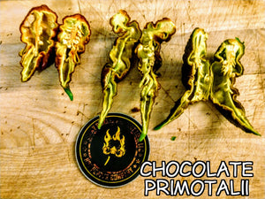 Chocolate Primotalii (Capsicum Chinense) Super Hot- 10 Isolated Seeds