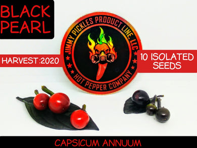 Black Pearl (Capsicum Annuum) Hot- 10 Isolated Seeds