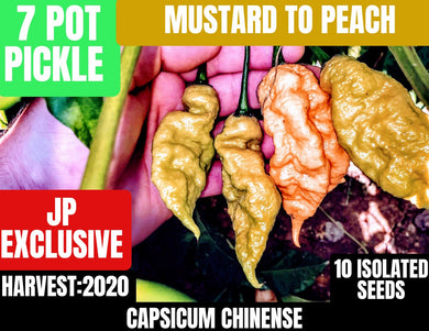 7 Pot Pickle/Mustard to Peach (Capsicum Chinense) Mega Hot- 10 Isolated Seeds