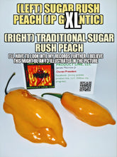 Load image into Gallery viewer, Sugar Rush Peach J.P. X.L. (Capsicum Chinense) Low Heat- 10 Isolated Seeds