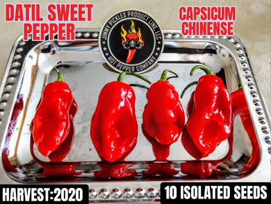 Datil Sweet Red (Capsicum Chinense) Low Heat- 10 Isolated Seeds