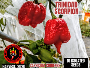Trinidad Scorpion (Capsicum Chinense) Super Hot- 10 Isolated Seeds