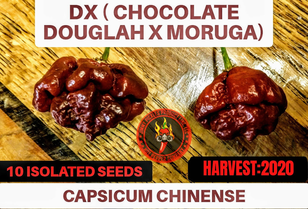 DX (Capsicum Chinense) Super Hot- 10 Isolated Seeds