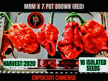 Load image into Gallery viewer, MRM X 7 Pot Brown (Red)(Capsicum Chinense)-Super Hot-10 Isolated Seeds