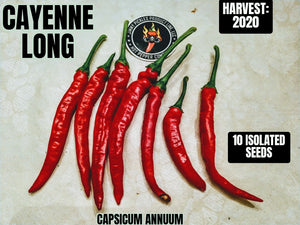 Cayenne Long (Capsicum Annuum) Mid-Hot- 10 Isolated Seeds