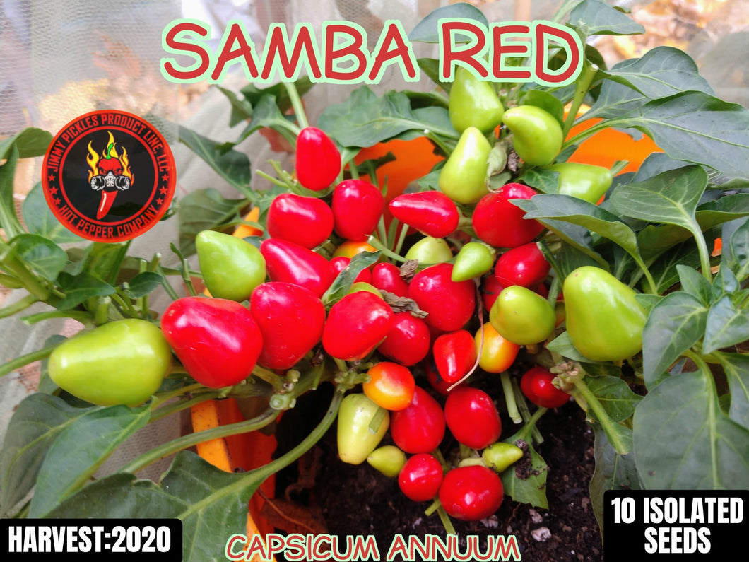 Samba Red (Capsicum Annuum) Hot-10 Isolated Seeds
