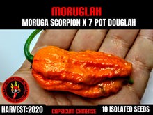 Load image into Gallery viewer, Moruglah (Capsicum Chinense) Super Hot- 10 Isolated Seeds