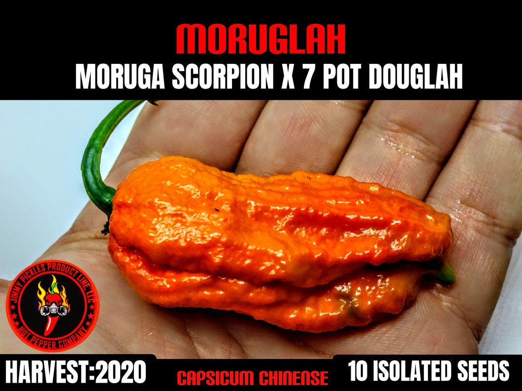 Moruglah (Capsicum Chinense) Super Hot- 10 Isolated Seeds