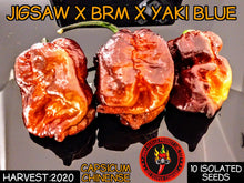 Load image into Gallery viewer, Jigsaw X BRM X Yaki Blue (Capsicum Chinense) Super Hot- 10 Isolated Seeds