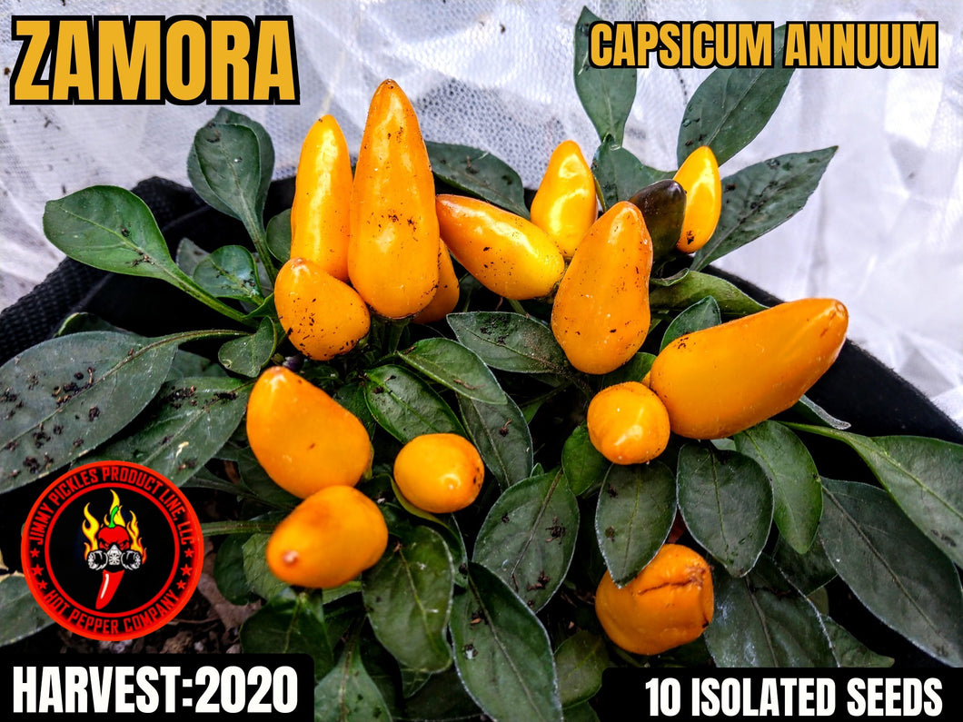 Zamora Yellow (Capsicum Annuum) Mild Heat- 10 Isolated Seeds