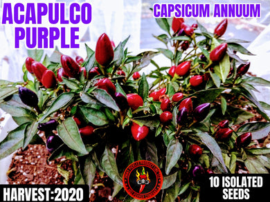 Acapulco Purple Ornamental (Capsicum Annuum) Mild-10 Isolated Seeds