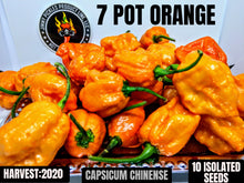 Load image into Gallery viewer, 7 Pot Orange (Capsicum Chinense) Super Hot- 10 Isolated Seeds
