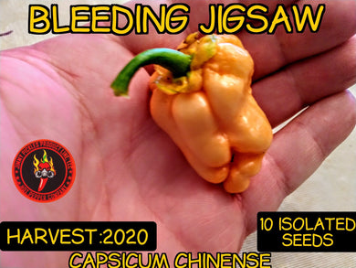 Bleeding Jigsaw (Capsicum Chinense) Super Hot- 10 Isolated Seeds
