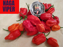 Load image into Gallery viewer, Naga Viper (Capsicum Chinense) Super Hot-10 Isolated Seeds
