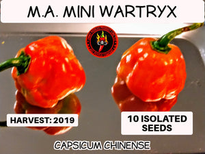 M.A. Mini Wartryx (Capsicum Chinense)-Mid/low Heat- 10 Isolated Seeds