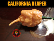 Load image into Gallery viewer, California Reaper (Capsicum Chinense)-Super Hot- 10 Isolated Seeds