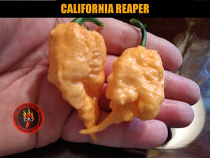 California Reaper (Capsicum Chinense)-Super Hot- 10 Isolated Seeds