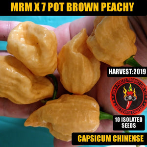 MRM X 7 Pot Brown Peachy (Capsicum Chinense)-Super Hot-10 Isolated Seeds