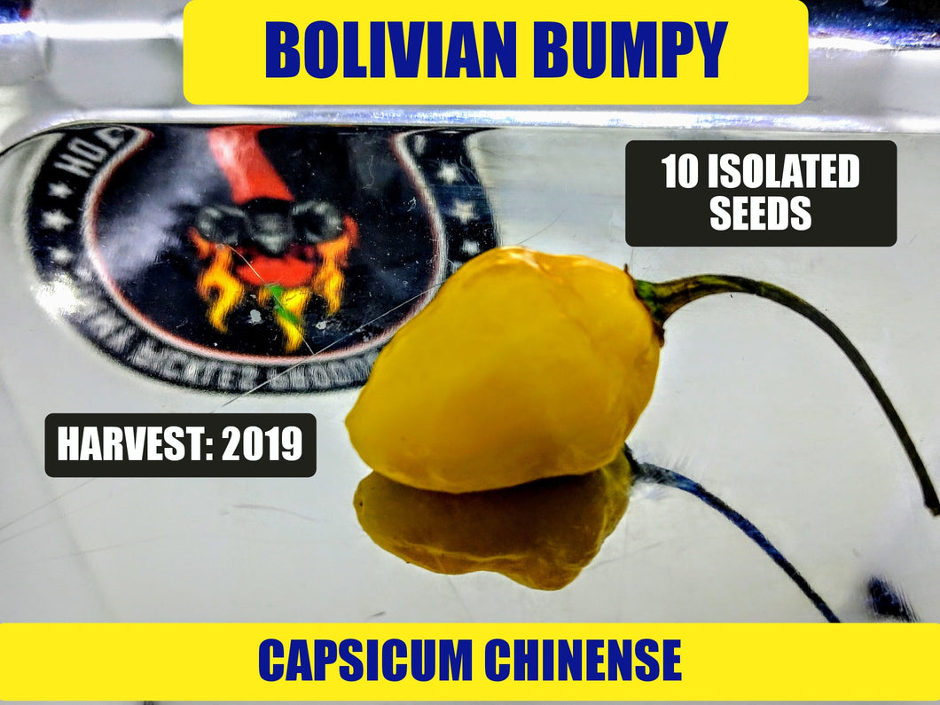 Bolivian Bumpy (Capsicum Chinense)-Low Heat- 10 Isolated Seeds