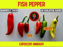 Load image into Gallery viewer, Fish Pepper (Capsicum Annuum) -Mid Hot-10 Isolated Seeds