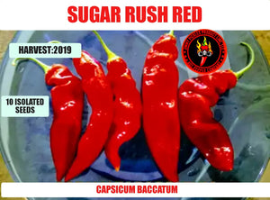 Sugar Rush Red (Capsicum Baccatum)-Mid Hot- 10 Isolated Seeds