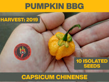Load image into Gallery viewer, Pumpkin BBG (Capsicum Chinense)-Super Hot-10 Isolated Seeds