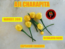 Load image into Gallery viewer, Aji Charapita (Capsicum Chinense) -Mid Hot-10 Isolated Seeds