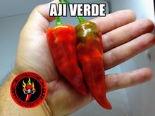 Load image into Gallery viewer, Aji Verde (Capsicum Baccatum)-Mild- 10 Isolated Seeds