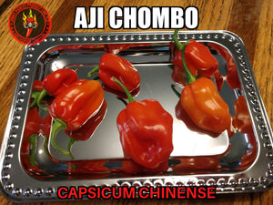 Aji Chombo/ Aji Panameno (Capsicum Chinense)-Hot- 10 Isolated Seeds
