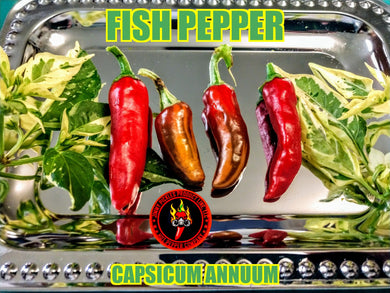 Fish Pepper (Capsicum Annuum) -Mid Hot-10 Isolated Seeds