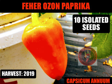 Feher Ozon Paprika (Capsicum Annuum)-No Heat- 10 Isolated Seeds