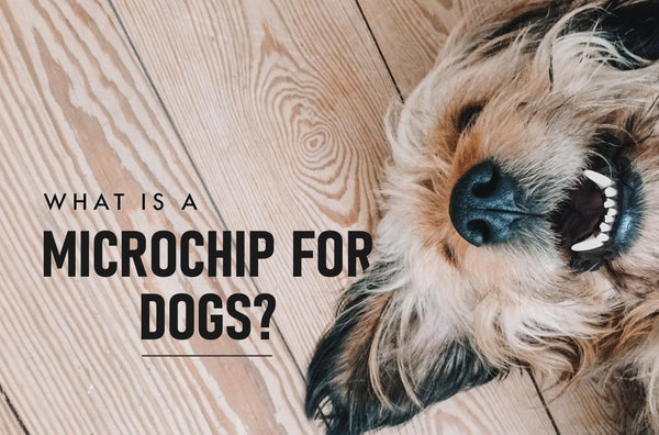 What Is a Microchip for Dogs?