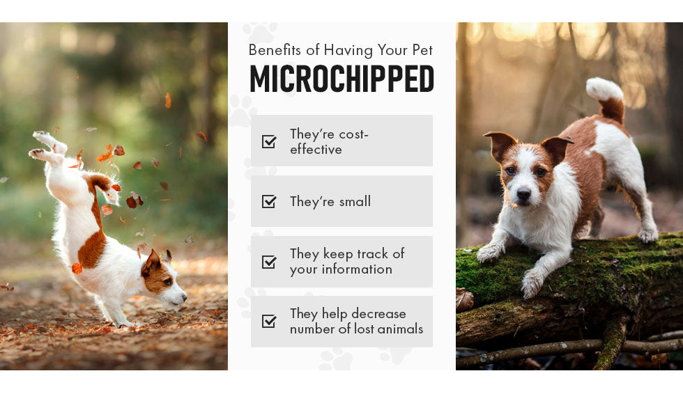 benefits having your pet microchipped