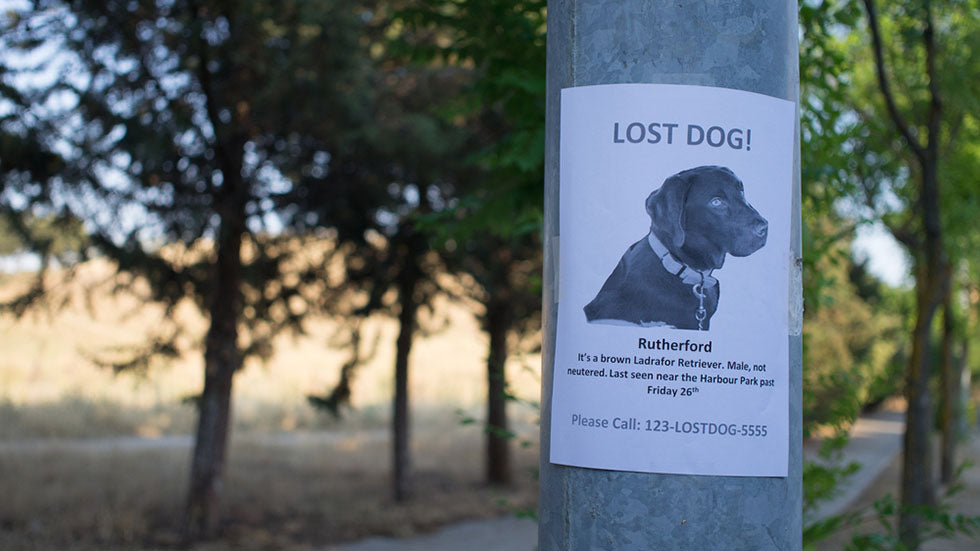 lost dog sign on pole