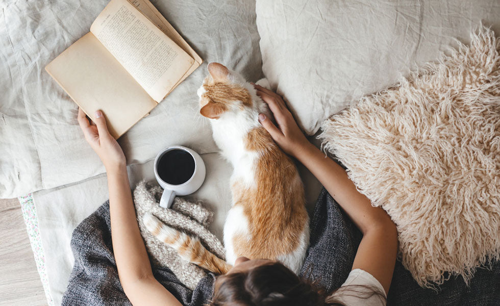 reading book with cat