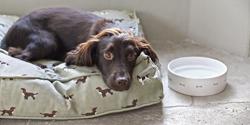 Gift ideas for dog owners by Sophie Allport