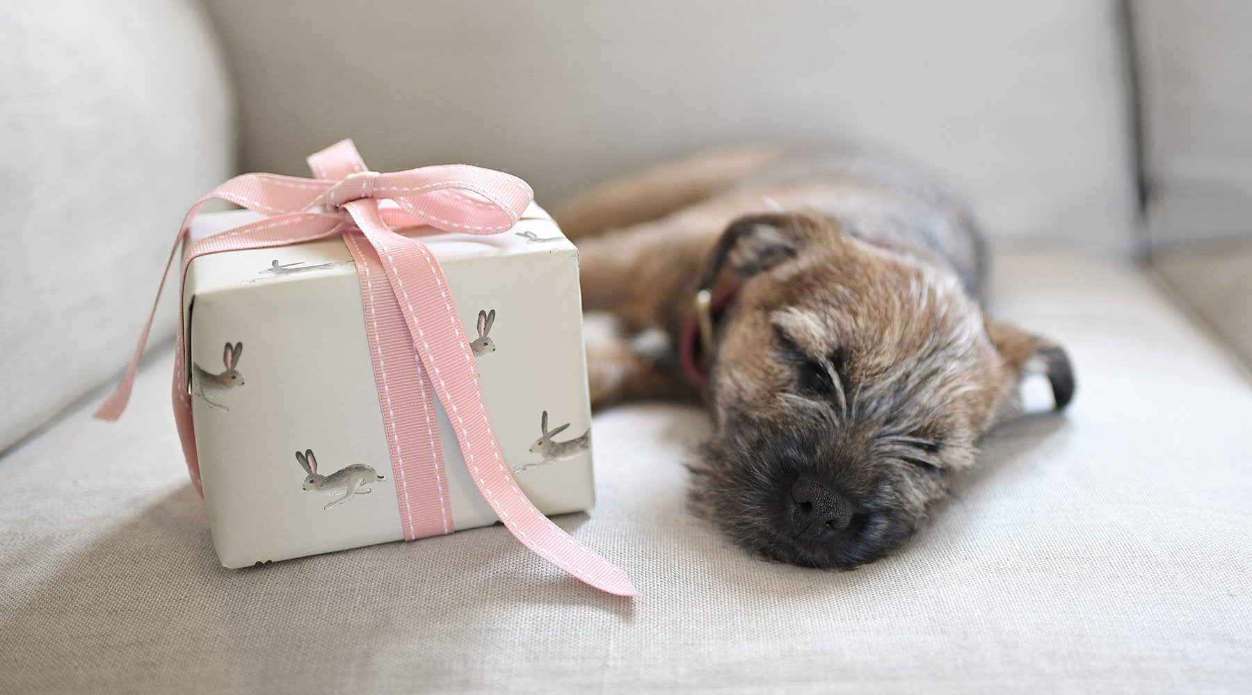 Gift ideas from Sophie Allport