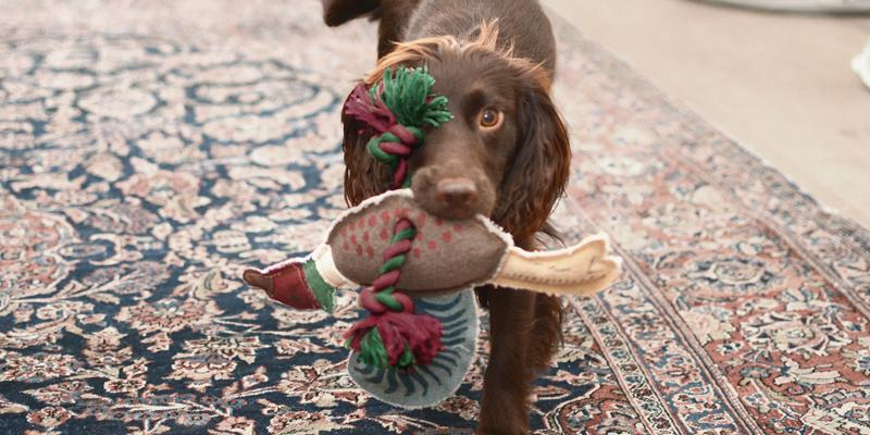 Gifts for pets. Rope dog toy by Sophie Allport