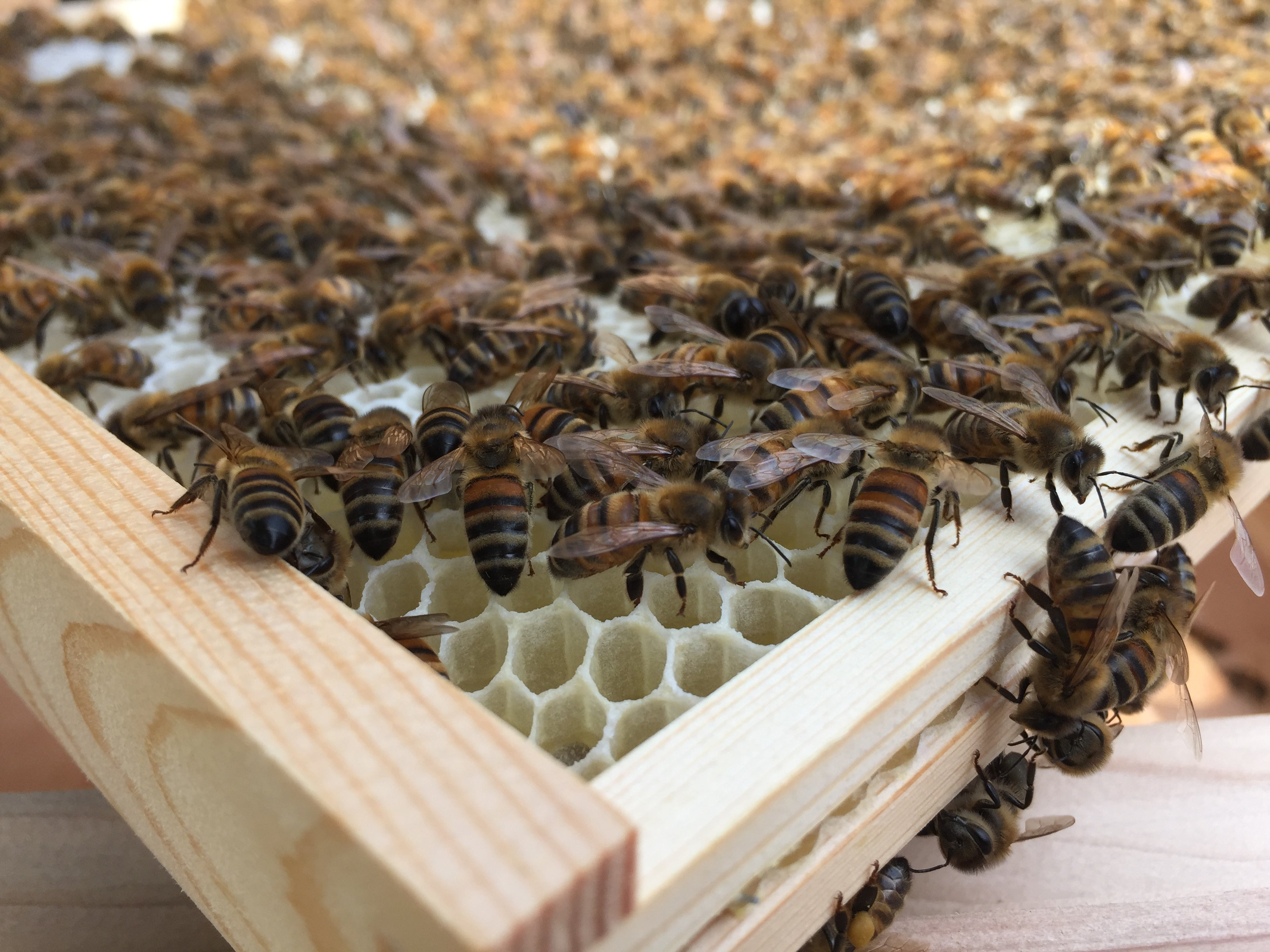 10 Bee facts from Bees & Co