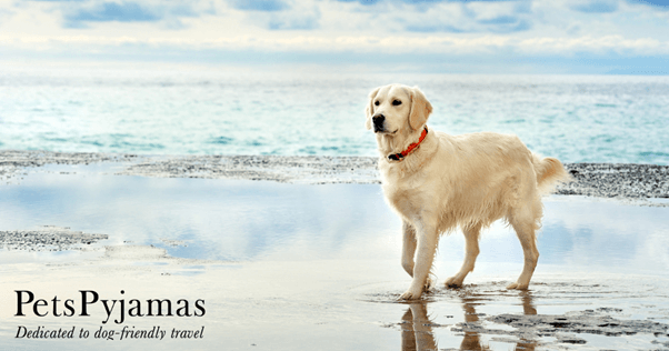 Top 10 Things To Pack When Travelling With Your Dog