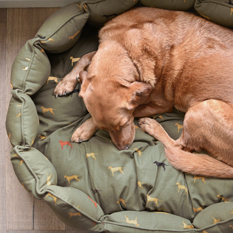 Dog facts - why dogs circle before they settle