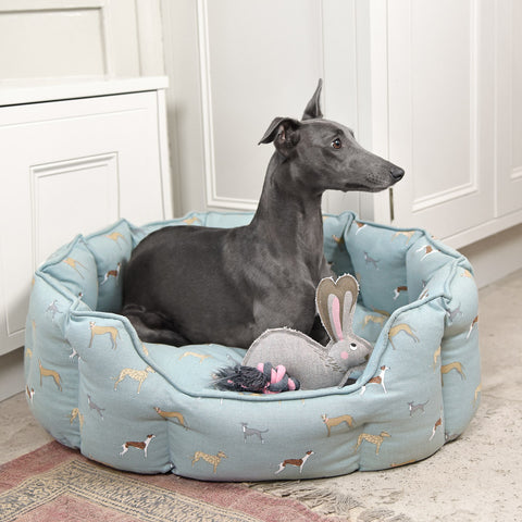 Whippet, Lurchers & Grey Hounds by Sophie Allport