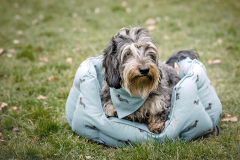 Dachshund facts - Sophie Allport dog bed