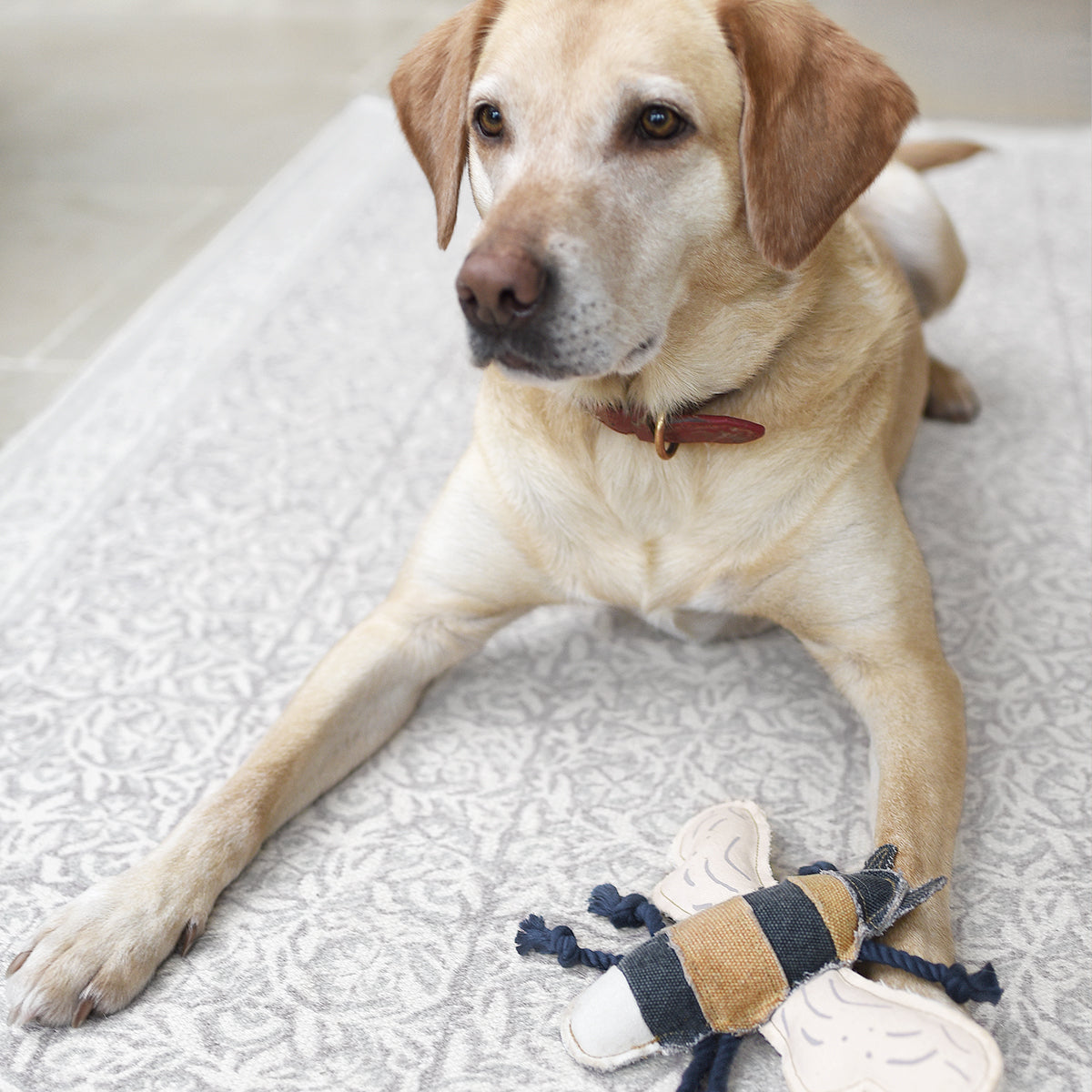 Bees Dog Toy