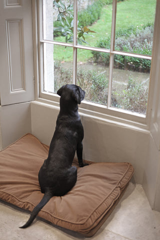Behind the scenes on the Dragonfly photo shoot - Mabel keeping guard
